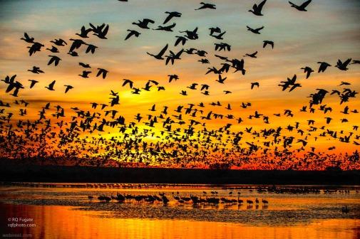 24-nature-photography-sunrise-by-bobfugate