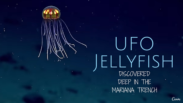 UFOJellyfish
