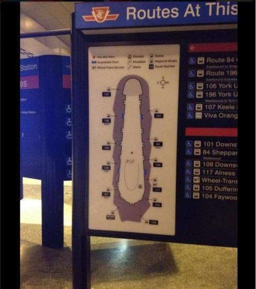 penis map